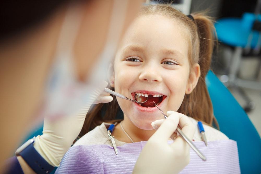 le développement des dents